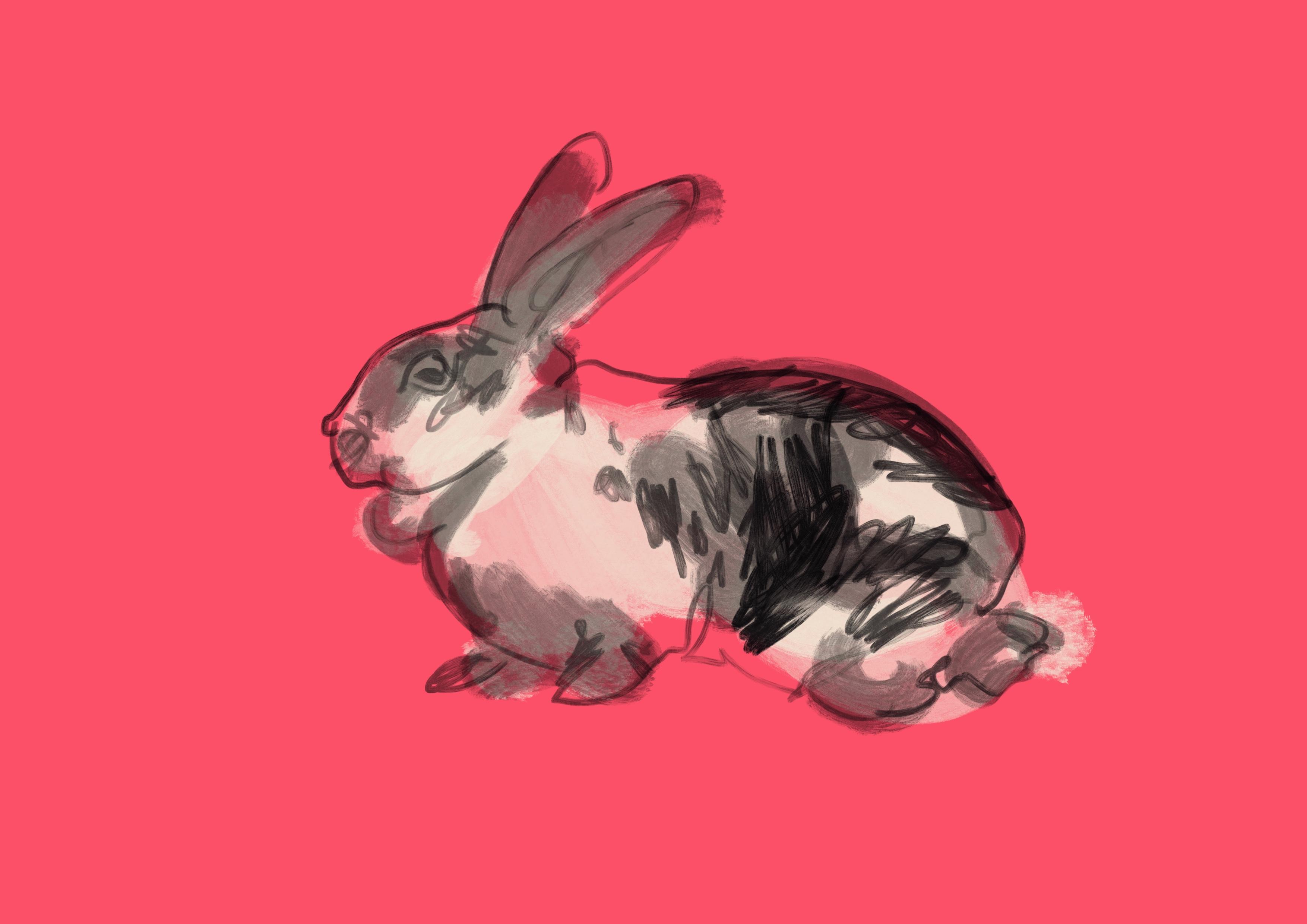 RabbitFazi